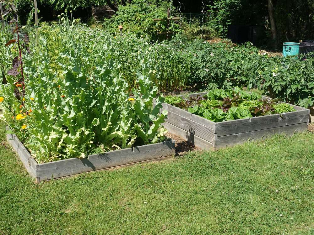 carre potager petite taille